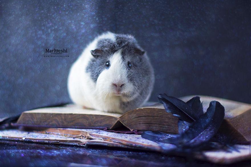 fotos-mascotas-cobaya-mieps (13)