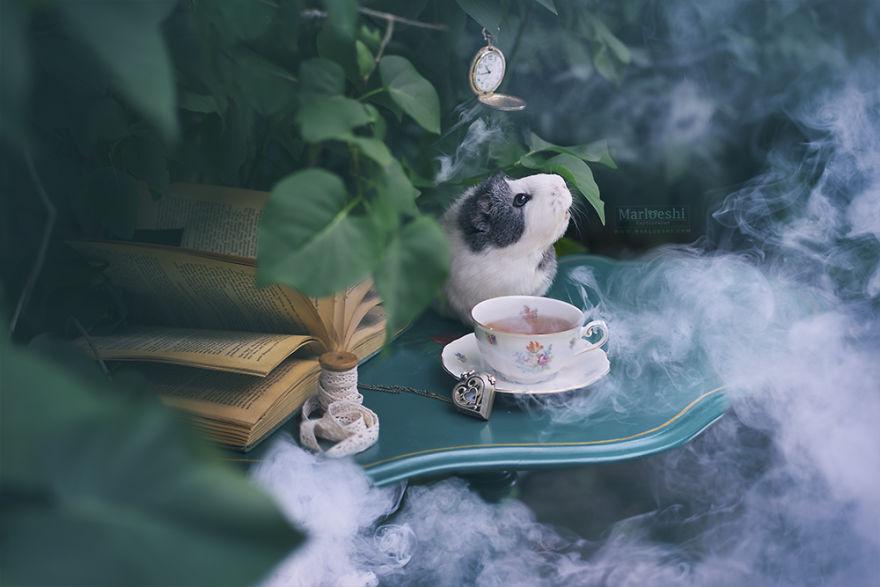 fotos-mascotas-cobaya-mieps (3)
