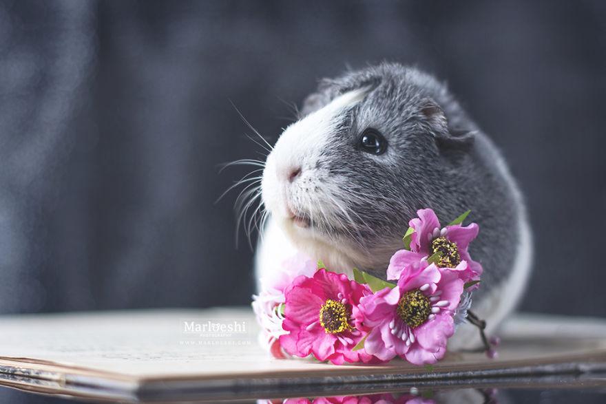 fotos-mascotas-cobaya-mieps (8)