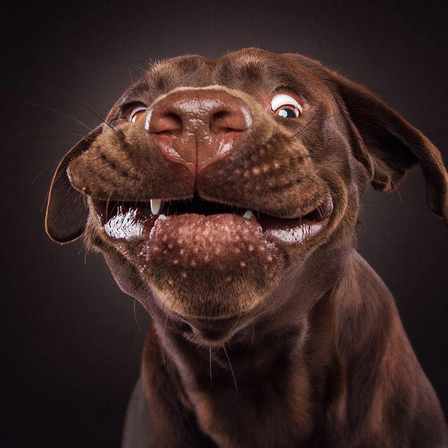 fotos-perros-expresiones-faciales-comida-christian-vieler-2 (10)