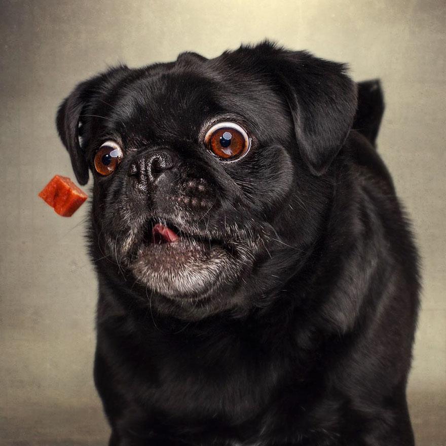fotos-perros-expresiones-faciales-comida-christian-vieler-2 (11)