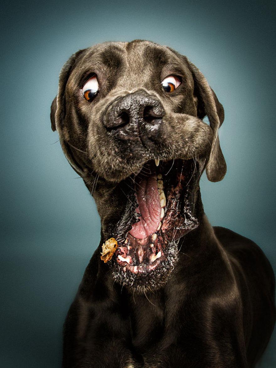 fotos-perros-expresiones-faciales-comida-christian-vieler-2 (2)
