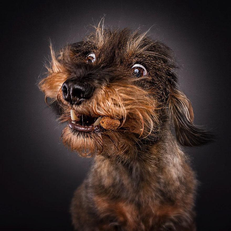 fotos-perros-expresiones-faciales-comida-christian-vieler-2 (5)