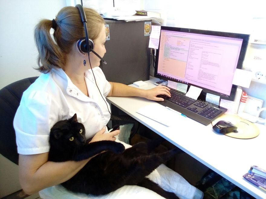 gato-paralitico-enfermero-lucifer-rusia (1)