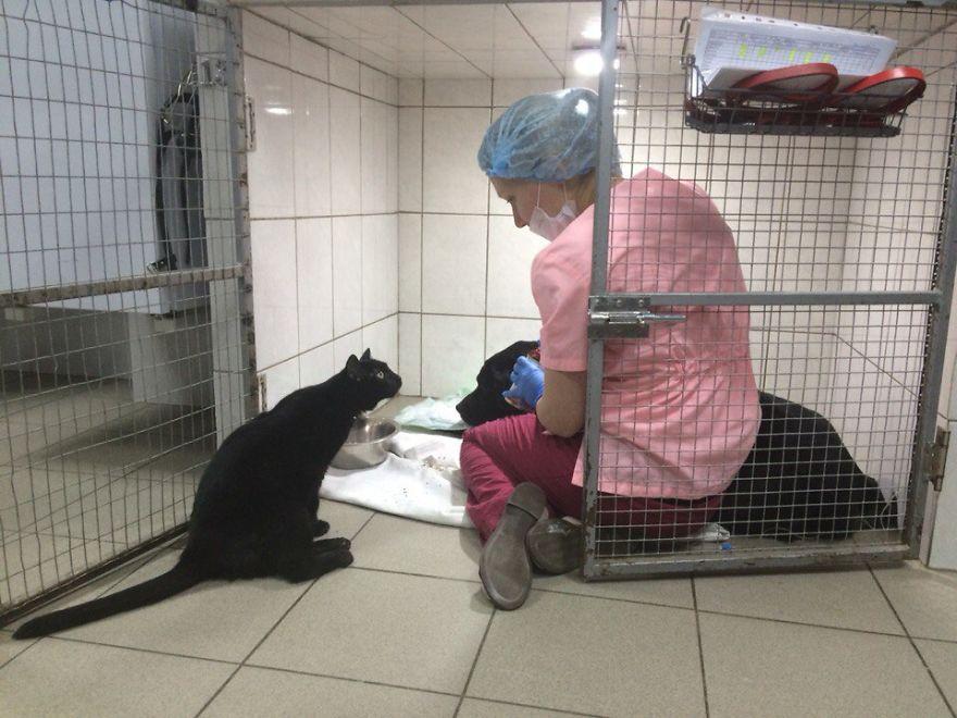 gato-paralitico-enfermero-lucifer-rusia (10)