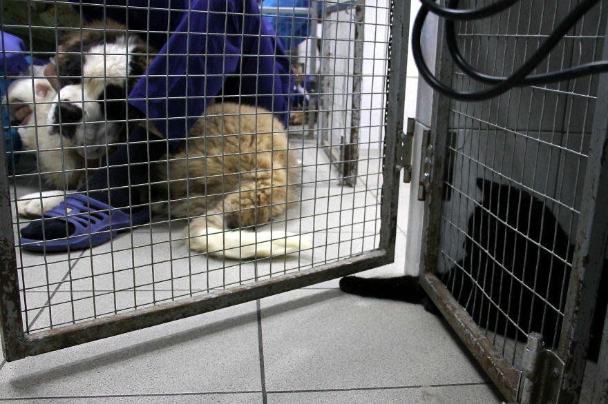 gato-paralitico-enfermero-lucifer-rusia (11)
