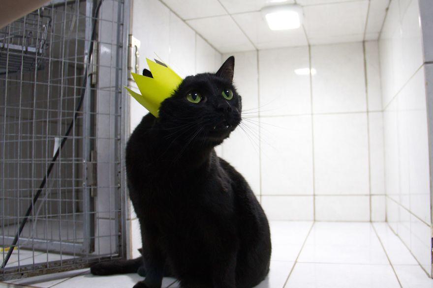 gato-paralitico-enfermero-lucifer-rusia (3)