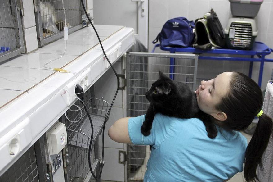 gato-paralitico-enfermero-lucifer-rusia (4)