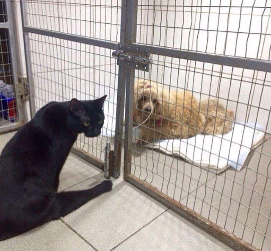 gato-paralitico-enfermero-lucifer-rusia (7)