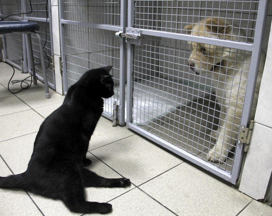 gato-paralitico-enfermero-lucifer-rusia (8)