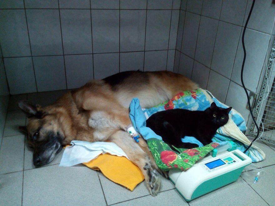 gato-paralitico-enfermero-lucifer-rusia (9)