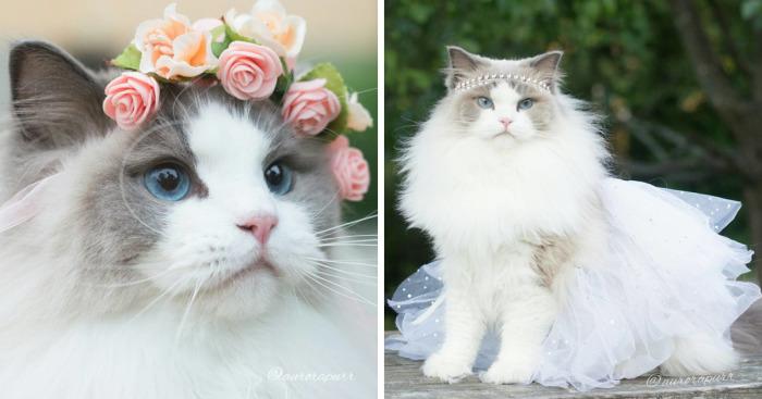 Esta es Aurora, una esponjosa princesa gatuna