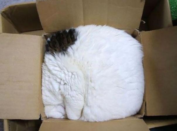 gatos-durmiendo-2 (1)