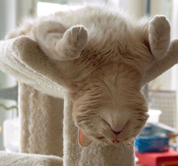 gatos-durmiendo-2 (12)