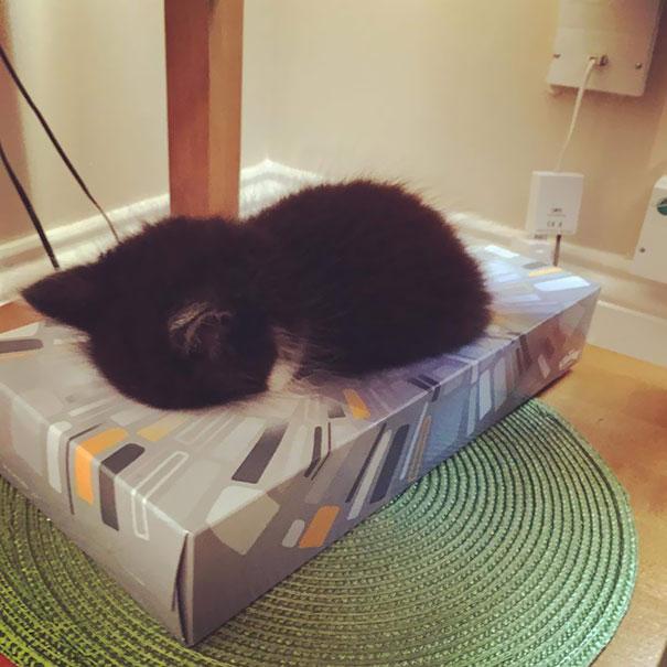 gatos-durmiendo-2 (13)