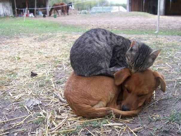 gatos-durmiendo-2 (8)