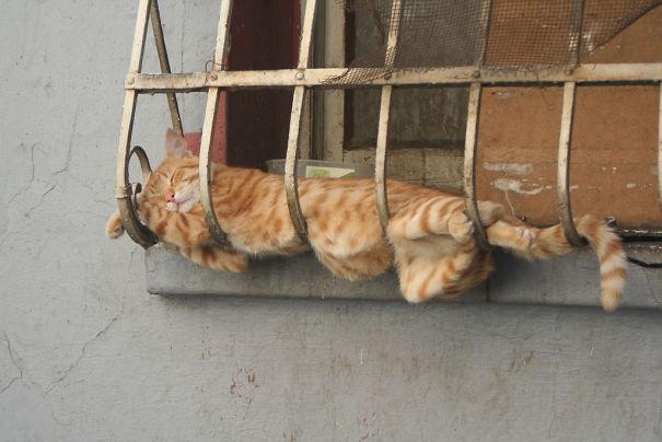 gatos-durmiendo-2 (9)