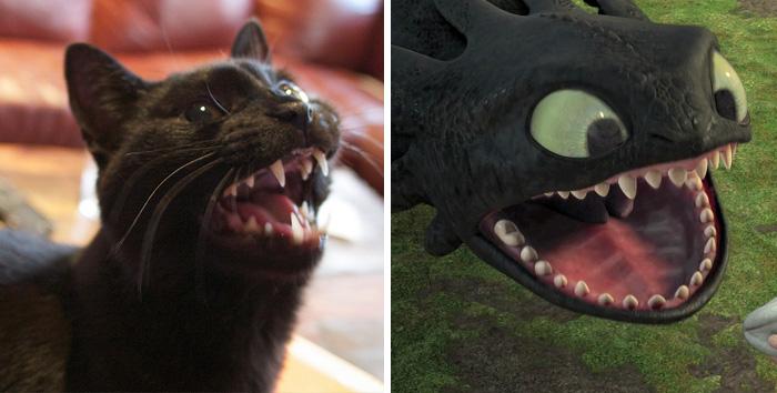 10 Gatos negros que en realidad son Desdentao / Chimuelo