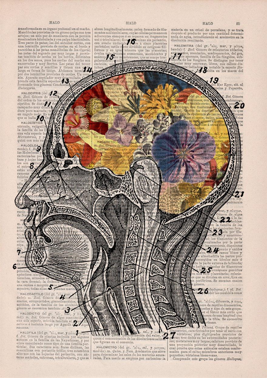 ilustraciones-anatomicas-flores-libros-viejos-prrint (1)