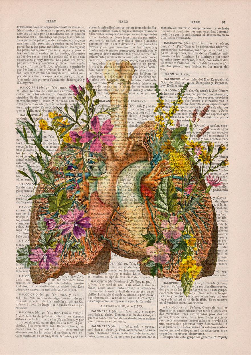 ilustraciones-anatomicas-flores-libros-viejos-prrint (4)