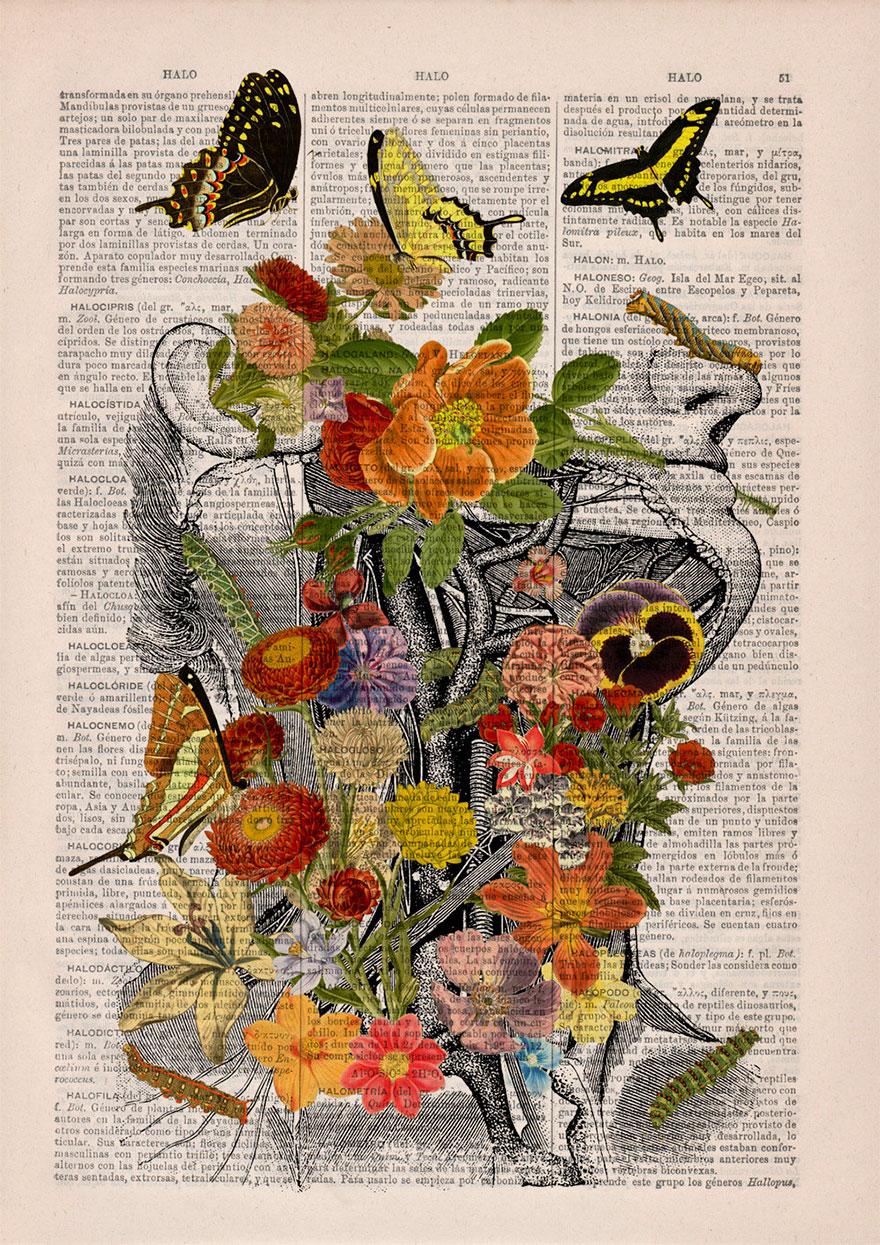 ilustraciones-anatomicas-flores-libros-viejos-prrint (5)