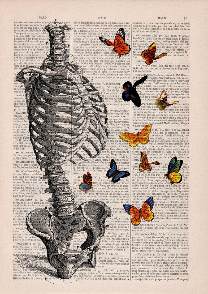 ilustraciones-anatomicas-flores-libros-viejos-prrint (9)
