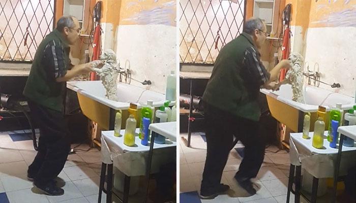 peluquero-canino-bailando-argentina