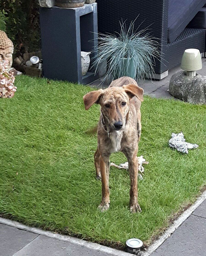 perro-columna-rota-adoptado-grecia (2)