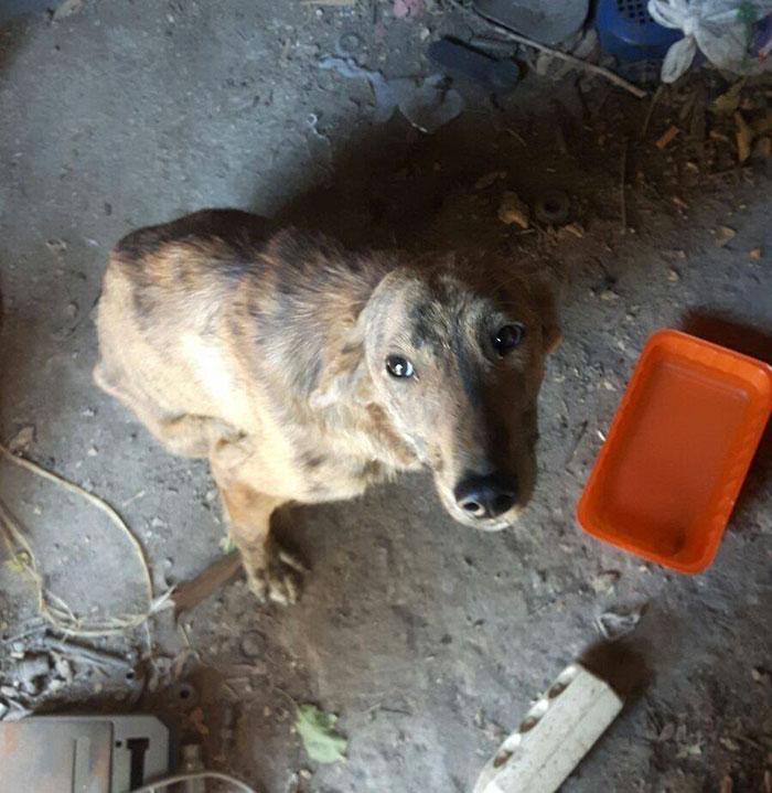 perro-columna-rota-adoptado-grecia (3)
