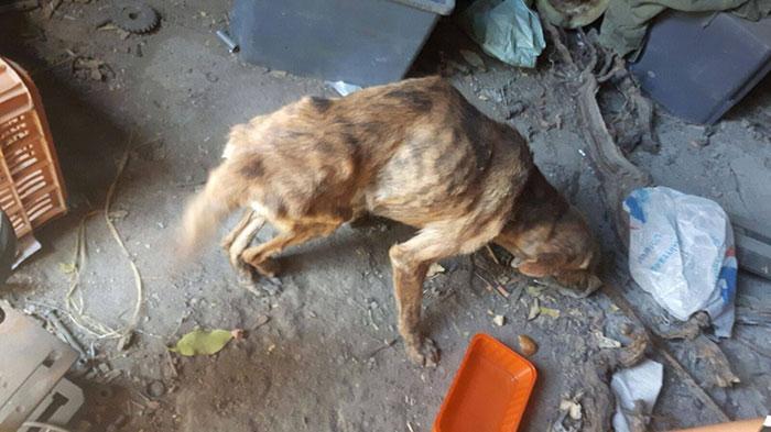 perro-columna-rota-adoptado-grecia (5)