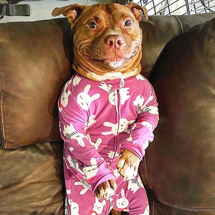 perro-pitbull-rescatado-sonrisa-instagram-meaty (12)