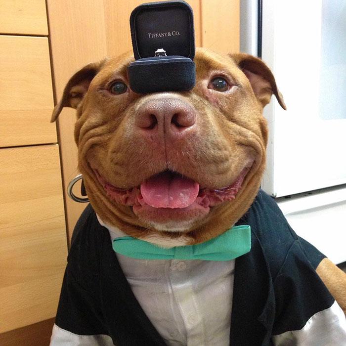 perro-pitbull-rescatado-sonrisa-instagram-meaty (5)