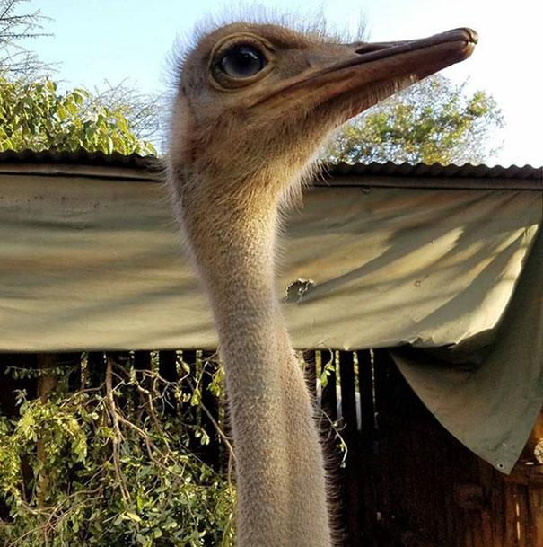amistad-animales-huerfanos-avestruz-elefante (3)