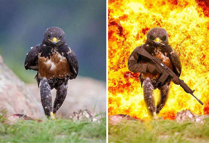 Este rudo halcón desata la más intensa batalla de photoshop existente