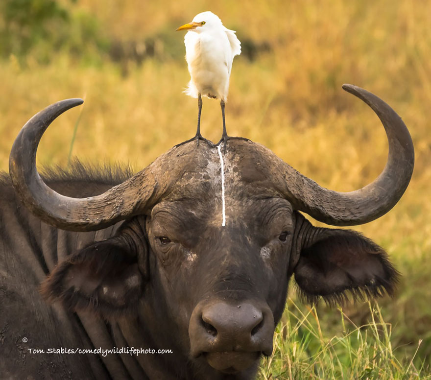 participantes-premios-fotografia-comedy-wildlife-2016 (9)