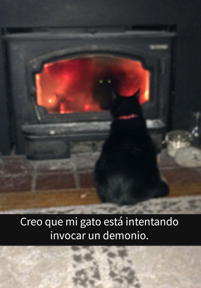 gatos-snapchat-10