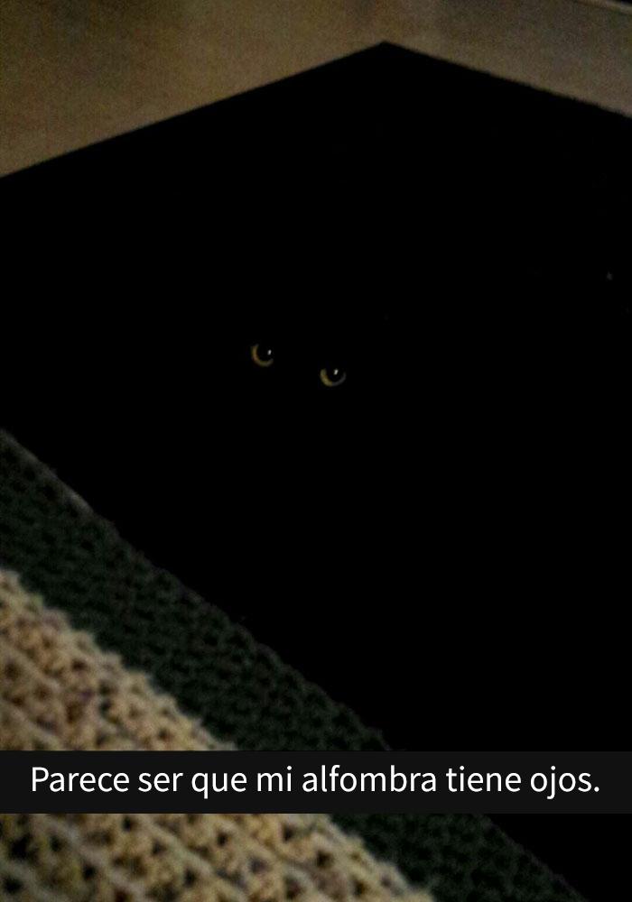 gatos-snapchat-12