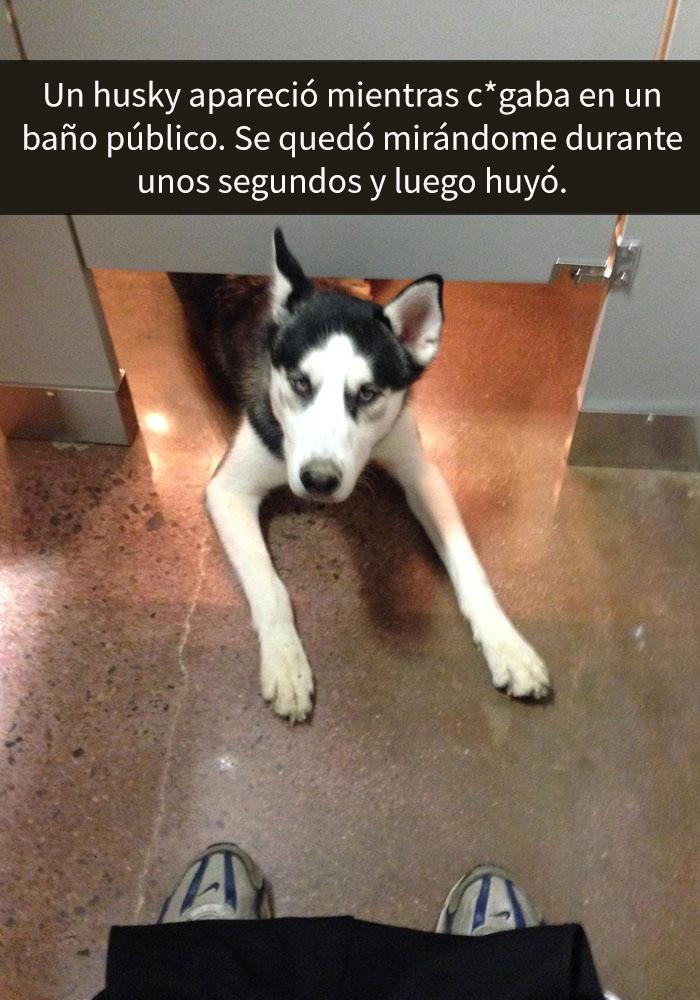 humor-perros-husky-2