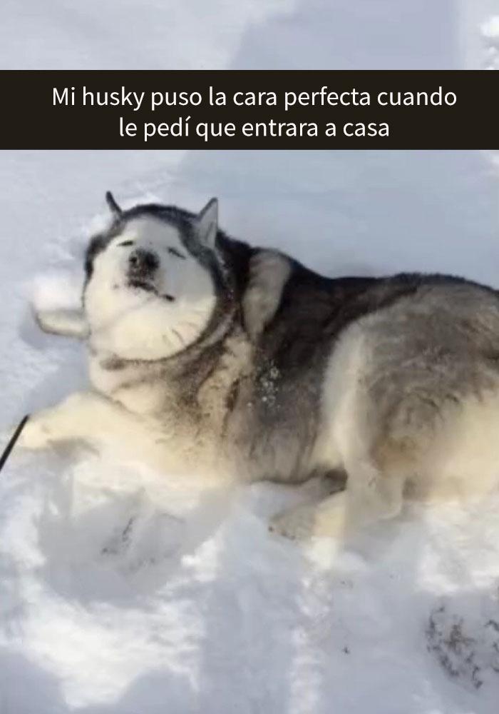 humor-perros-husky-3