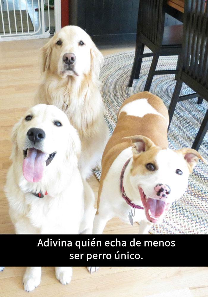 perros-snapchat-9
