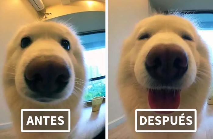 Fotos de mascotas antes y después de decirles lo buenos que son