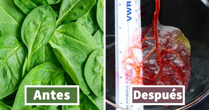 Científicos transforman hojas de espinacas en tejido cardíaco humano totalmente funcional