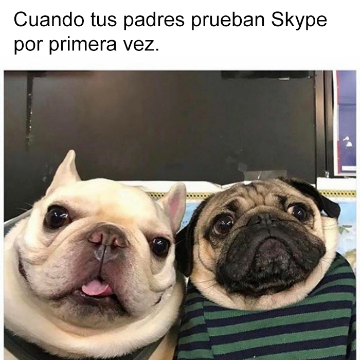 memes perros 15 5909fcebe88f0__700 10 divertidos memes de perros que te harán sonreír bored panda