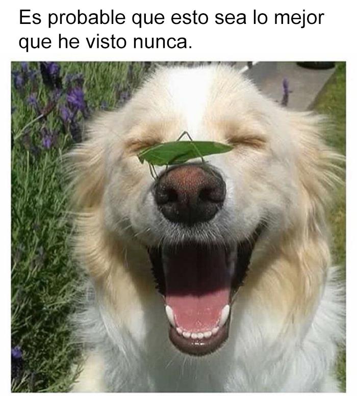 memes perros 4 5909fd46e574b__700 10 divertidos memes de perros que te harán sonreír bored panda