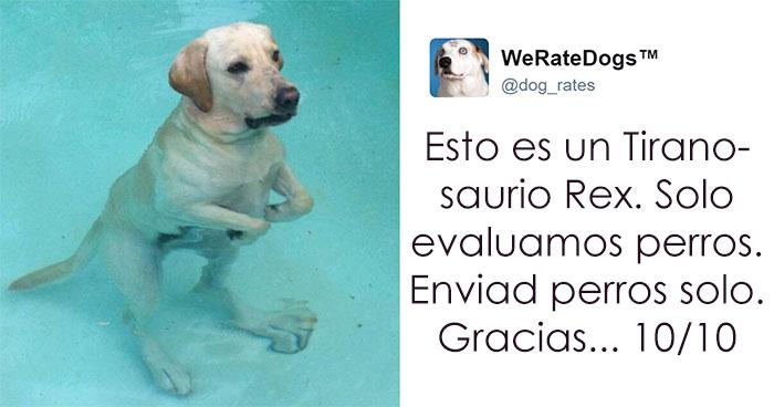 """10+ Veces que la gente metió la pata al enviar fotos de perros al twitter """"We Rate Dogs"""""""