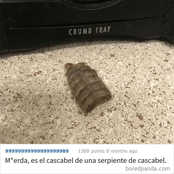 He Encontrado Esto Junto A La Tostadora. Espero Que No Sea Algo De Cucarachas