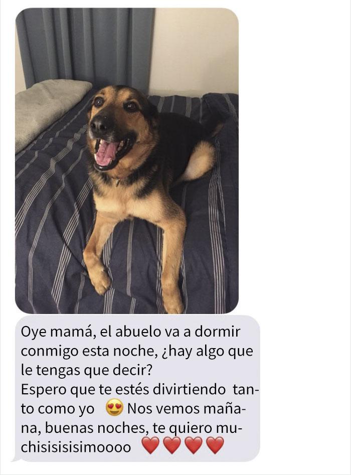 abueloperro-4