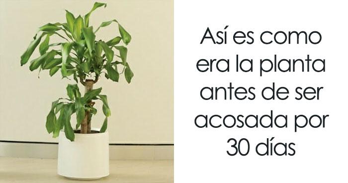 IKEA Solicita Que La Gente Acose A Esta Planta Por 30 Días Para Ver Lo Que Sucede Y Los Resultados Son Reveladores