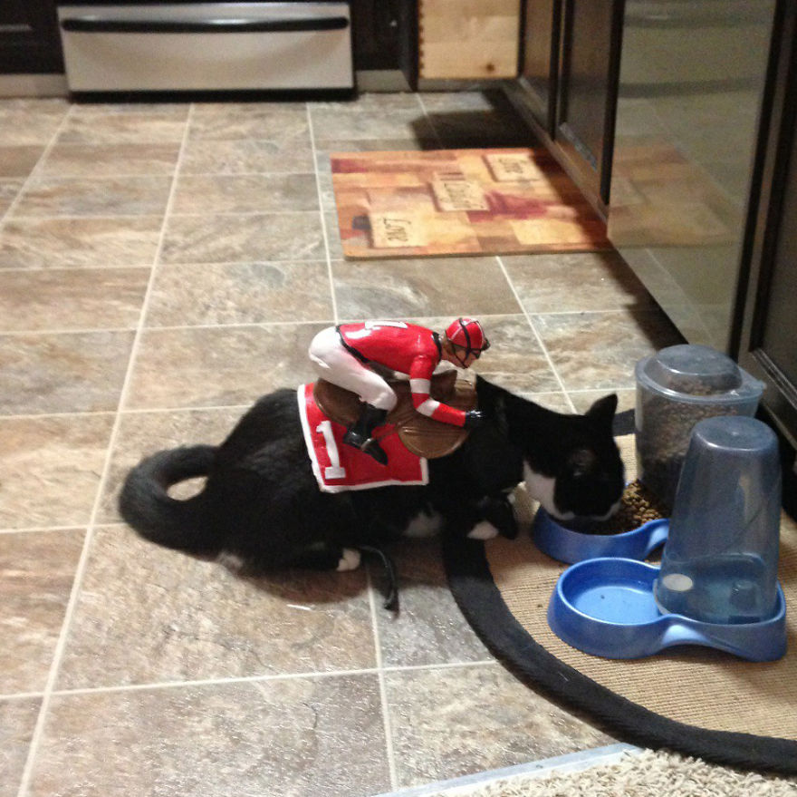 disfraz-mascotas-halloween-112__880