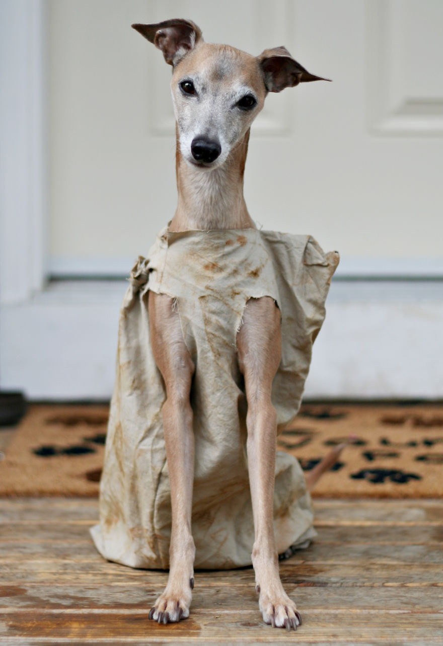 disfraz-mascotas-halloween-13__880